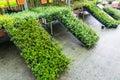 Garden Store Greenhouse