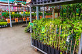 Garden store plants for sale in hornbach romania Royalty Free Stock Image