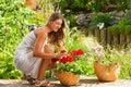 Garden In Summer – Happy ...