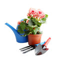 Garden tools and a blooming flower in a pot Royalty Free Stock Images