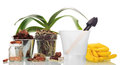 Garden tools and  orchid plants Royalty Free Stock Photo