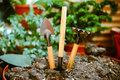 Garden tools on plain soil in the pot, including houseplants. Royalty Free Stock Photo
