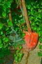 Garden tools rakes and spade and rambling ivy gardening in agarden corner Royalty Free Stock Photos
