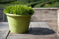 Garden tree in green flowerpot on the wood table Stock Photography