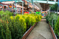 Garden trees store for sale in hornabach home improvement Stock Photos