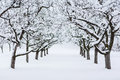 Garden trees in winter covered snow Royalty Free Stock Photos