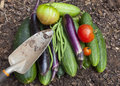 Garden vegetables a bounty of freshly picked homegrown Royalty Free Stock Image