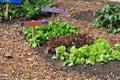Garden Vegetables Royalty Free Stock Photo