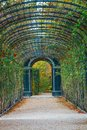 Garden walkway forming a green tunnel of acacias in Vienna Royalty Free Stock Photo