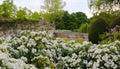 Garden of White Royalty Free Stock Photo