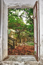 Garden through the window Royalty Free Stock Photo