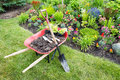 Garden work being done landscaping a flowerbed with red wheelbarrow full of organic potting soil and celosia seedlings standing Royalty Free Stock Image