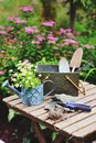 Garden work still life in summer. Camomile flowers, gloves and tools Royalty Free Stock Photo