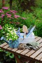 Garden work still life in summer. Camomile flowers, gloves and tools on wooden table outdoor in sunny day Royalty Free Stock Photo