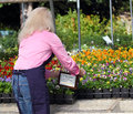 Garden worker tends to plants a center giving attention the pansies Stock Photos
