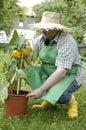 Gardener: checking Stock Images