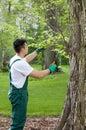 Gardener cropping tree Royalty Free Stock Photo