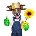 Gardener dog happy with thumb up and a flower Stock Photos