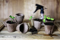 Gardener hand sprout table Royalty Free Stock Photo