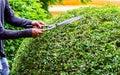 Gardener working in cozy home garden on summer Royalty Free Stock Photo