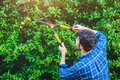 Gardener hedge trimming or rip bush with grass shears gardening scissors activity working during stay home at backyard Royalty Free Stock Photo