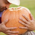 Gardener with huge pumpkin young holding pumpking in the garden Royalty Free Stock Image