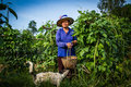 Gardener life pic up cow pea with her dog around Stock Images