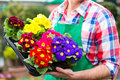 Gardener in market garden or nursery female florist flower shop greenhouse Royalty Free Stock Photography