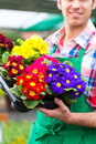 Gardener in market garden or nursery female florist flower shop greenhouse Royalty Free Stock Photo