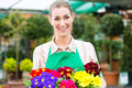 Gardener in market garden or nursery female florist flower shop greenhouse Stock Photo
