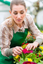 Gardener in market garden or nursery female florist flower shop greenhouse Royalty Free Stock Images