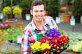 Gardener in market garden or nursery florist flower shop greenhouse Royalty Free Stock Images