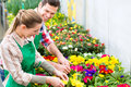 Gardener in market garden or nursery florists gardeners flower shop greenhouse Stock Photography