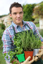 Gardener with pots of aromatic herbs in hands man vegetable garden planting Stock Photography