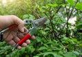 Gardener pruning Royalty Free Stock Photo