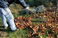 The gardener rakes up a pile of fallen autumn leaves in the garden. Royalty Free Stock Photo