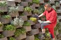 Gardener relies flowers in retaining concrete wall man Stock Image
