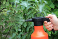 Gardener sprinkles young apple tree from pests and diseases with