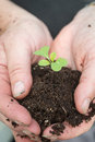 Gardener tenderly cupping seedling和地球夫人在手上 免版税图库摄影