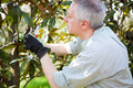 Gardener thinking to prune a tree professional Stock Images