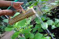 Gardener use the nature bamboo can to watering in the garden Royalty Free Stock Photo