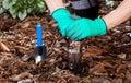 Gardener using planter in garden a horizontal Royalty Free Stock Photo
