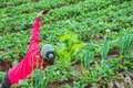 Gardener woman asian. farmers are taking photos Selfie in vegetable plots Royalty Free Stock Photo