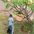 The gardener works in the garden, Varadero, Matanzas, Cuba. Royalty Free Stock Photo