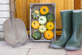 Gardeners equipment crate with pumkins rain boots and garden shovel in the backyard Stock Photo