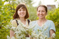 Gardeners in meadowsweet plant Royalty Free Stock Image