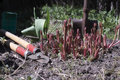 Gardening close up of a kitchen garden with tools and sprouts blurred foreground and background concept of Royalty Free Stock Photo