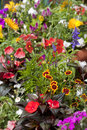 Gardening closeup of colorful arangement of flowers in flower post Royalty Free Stock Photos