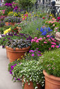 Gardening an colorful arangement of flowers in flower post Stock Photography