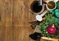 Gardening concept - buttercup flower in a pot